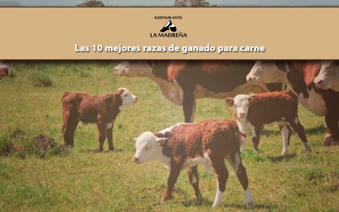 Las 10 mejores razas de ganado para carnes de vacuno